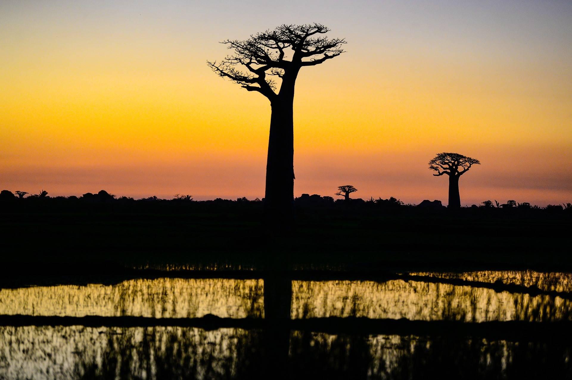 Baobab a Madagascar